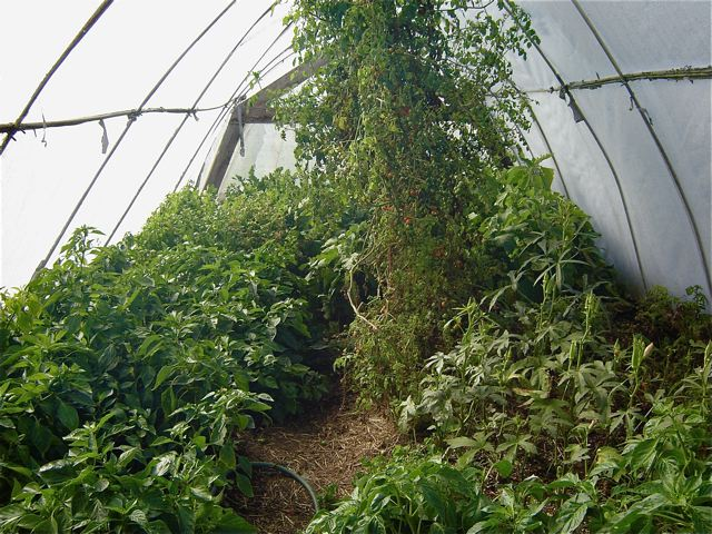 The Greenhouse was moist, warm and smelled like spring!