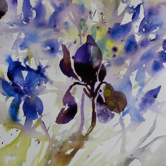 These iris were like having graceful dancers in the studio.