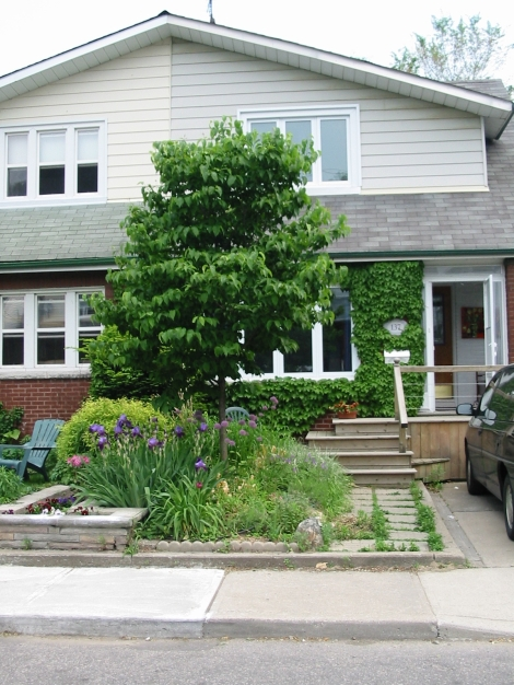 My front garden in Toronto 5 years ago. It was crammed with everything!