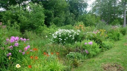 Perennials - four years after planting