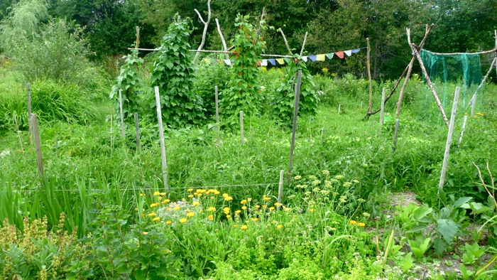 The vegetable garden at the beginning of August