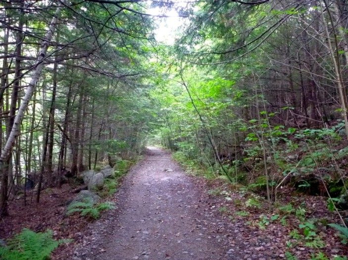 We added ¾ of an hour to our walk on the morning that we explored this path along a brook.
