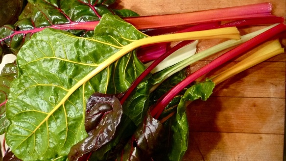 Rainbow swiss chard. The seeds are from Veseys.
