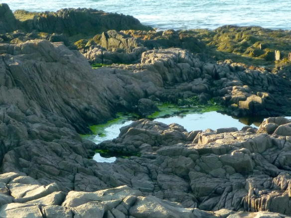 A tidal pool rich with plants and critters.
