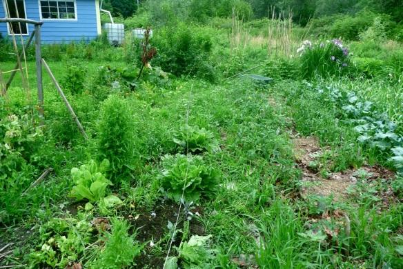 before after garden2
