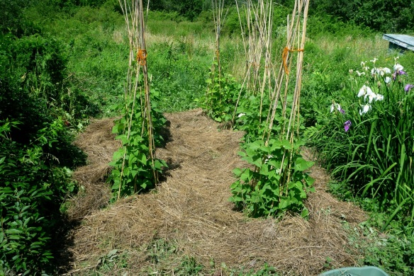 before after garden3