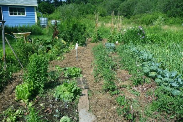 before after garden4