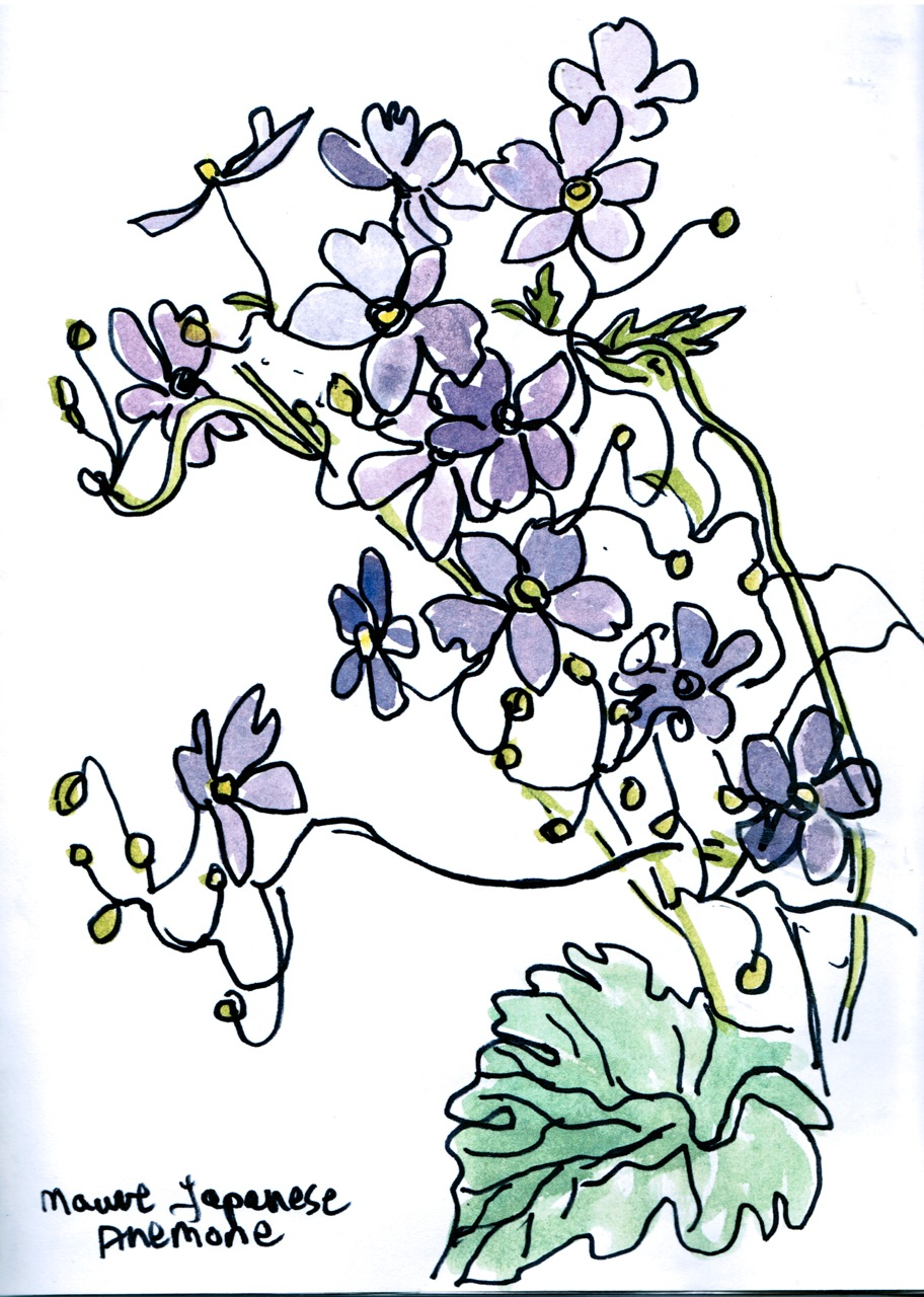 Anemone drawing © Flora Doehler, 2014