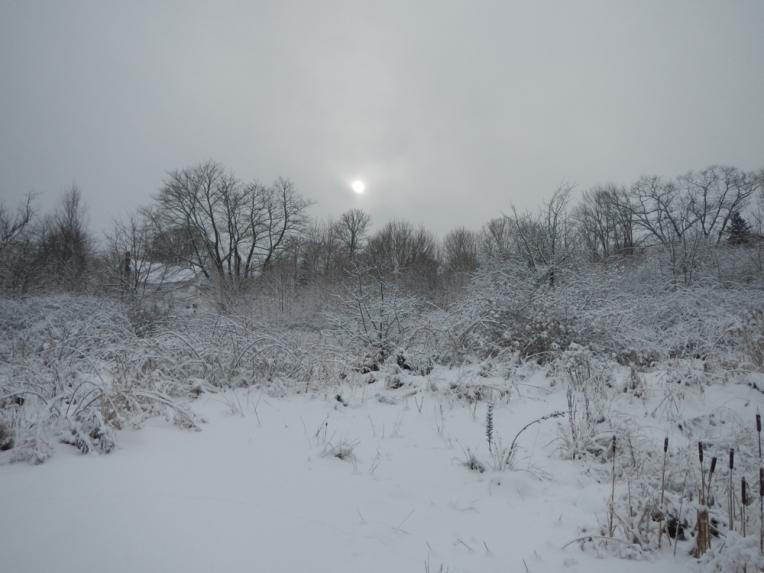 The weak winter sun