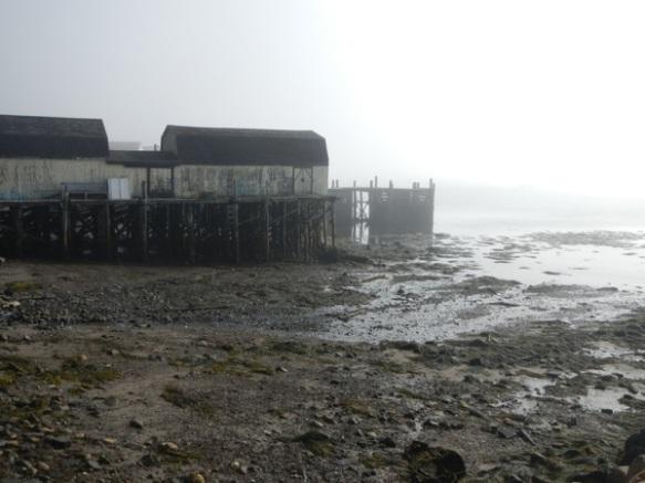 Brier Island day 31
