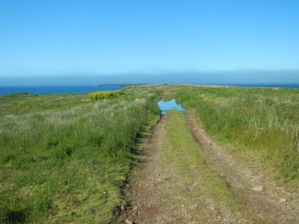 Brier Island day 33
