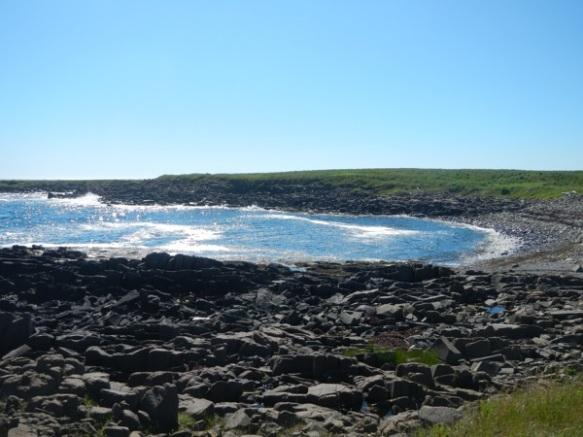 Brier Island day 38