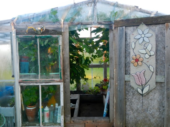 A Homemade greenhouse with aluminum storm windows and a removable roof for the hot summer. Look at those grape plants.
