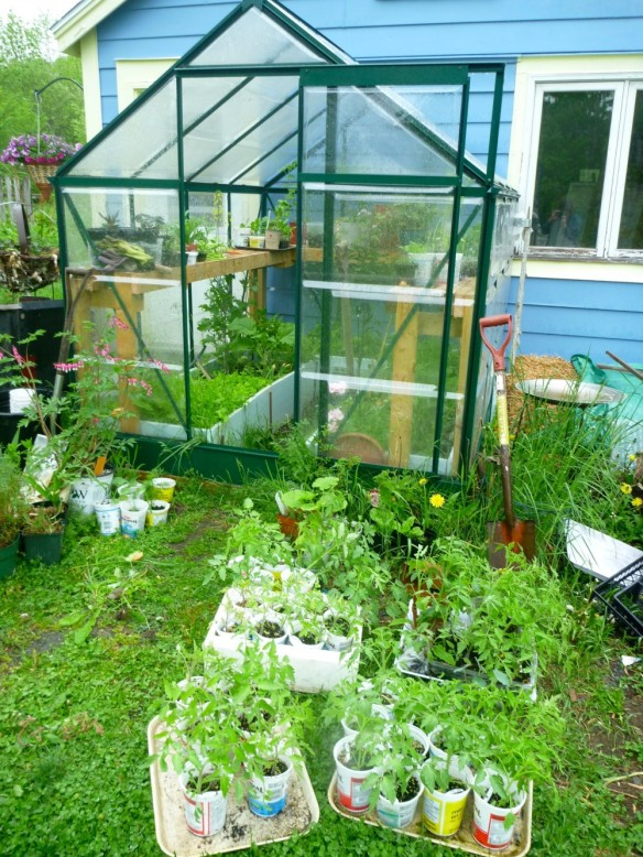 Our little greenhouse
