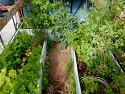little greenhouse - 4