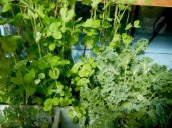 little greenhouse - 9